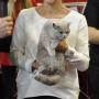 Foto: Dorota Krauze Donna Summer Amazing Aisha*PL FIFE: Wystawa Rybnik 22-23.10.2016 Finał Best in Show :) 2xEX1, 2X BIV, 2X Nom Bis, 2x BIS
