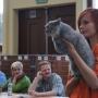 kassidy-wroclaw-09-2012-bis-specjal-show-kor-koty-brytyjskie-kassidy-hodowla-kotow-amazing-aisha