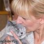 koty_brytyjskie_aisha_hodowla_kotow_wystawy_liberec2006_kassi2