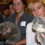 koty_brytyjskie_aisha_hodowla_kotow_wystawy_liberec2006_kassi7