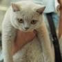 foto: DOROTA LIPA Number ONE AmazingAisha*PL FIFE : 24-25.08.2019 Cat Show in Ostrava 2 Ex1, 2xNom Bis, Best in Show kitten 4-7 category III