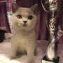 foto: Katarzyna Burzyński FIFE : 28-29.09.2019 Wystawa Austria TULLN - Number ONE Amazing Aisha *PL - Junior Winner :) :) :) 2 x BIS kitten cat III