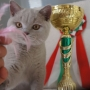 FIFE: Sobota 07.09.2019 Number One Amazing Aisha*PL BIS kitten cat III + BOB Kitten 3