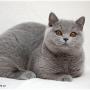 10-1-12--koty-brytyjskie-Pennsylvania- Foto: Ivana Mrázová