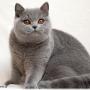 10-1-12-223--koty-brytyjskie-Pennsylvania- Foto: Ivana Mrázová